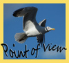 Point_of_view_2