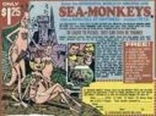 Sea_monkeys